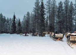 Reindeer safari with Canterbury travel